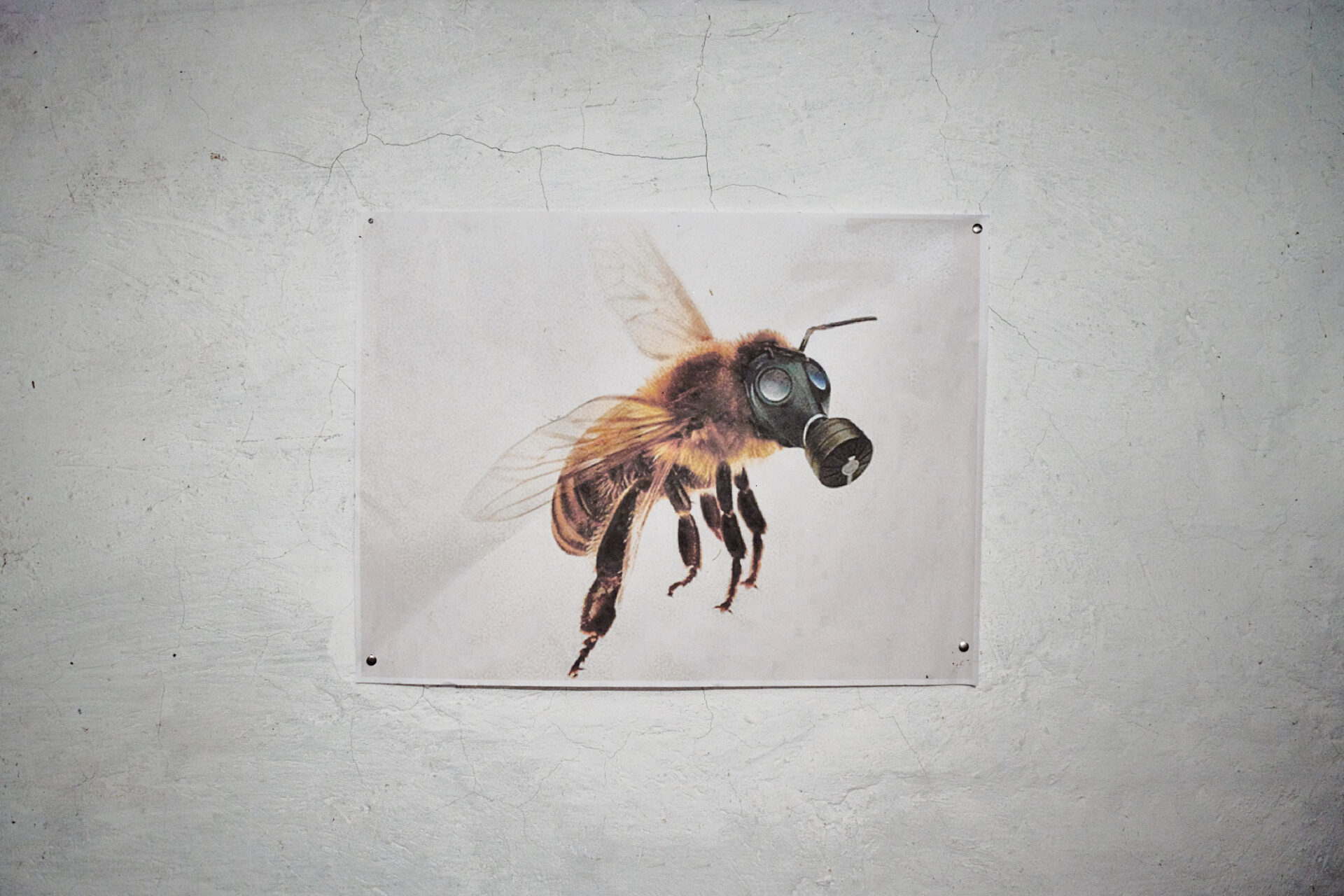 Jake Eshelman_Telling of the Bees_16