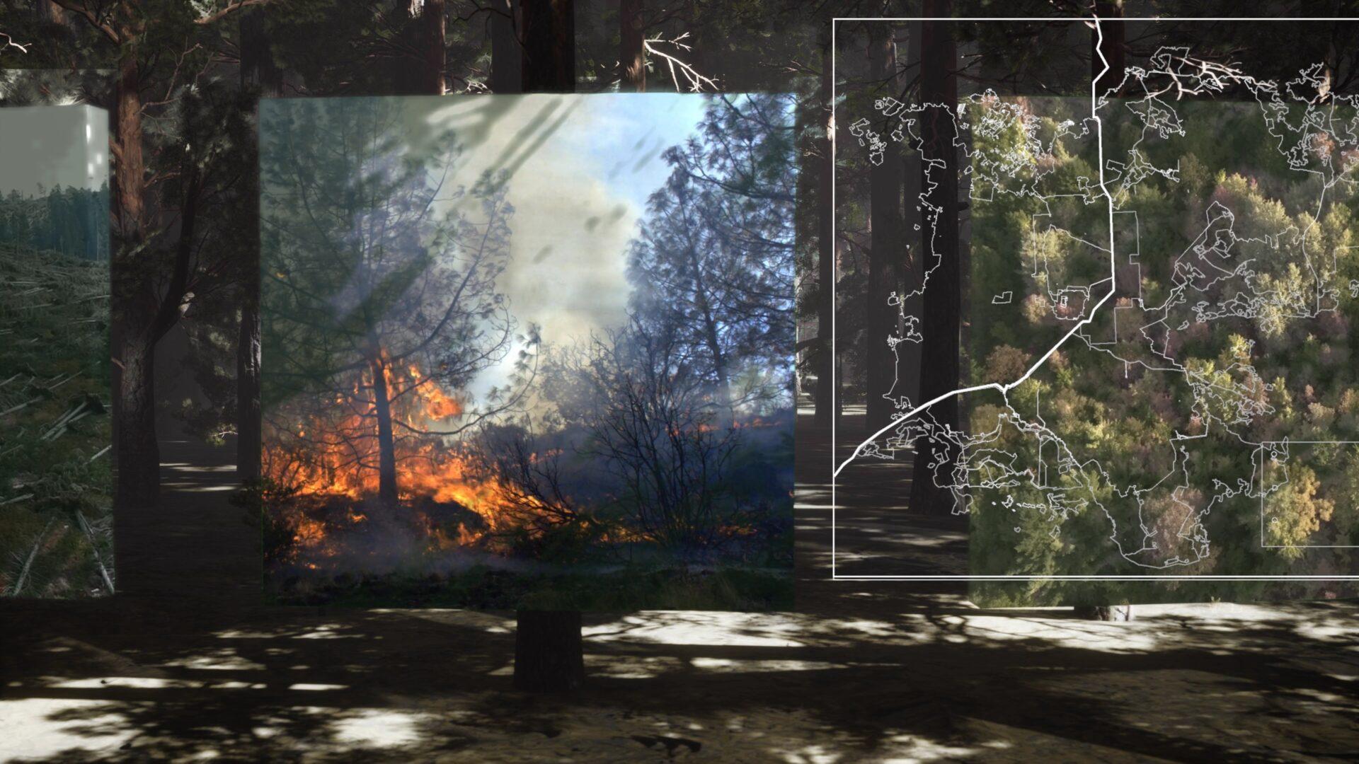 Extended Forest_Tekla Gedeon_08